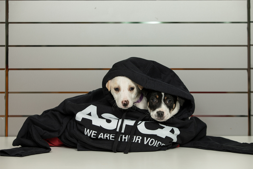 Puppies in a hoodie