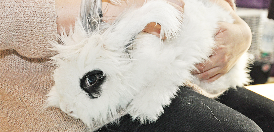 More than 60 Adopters Find Some-Bunny to Love