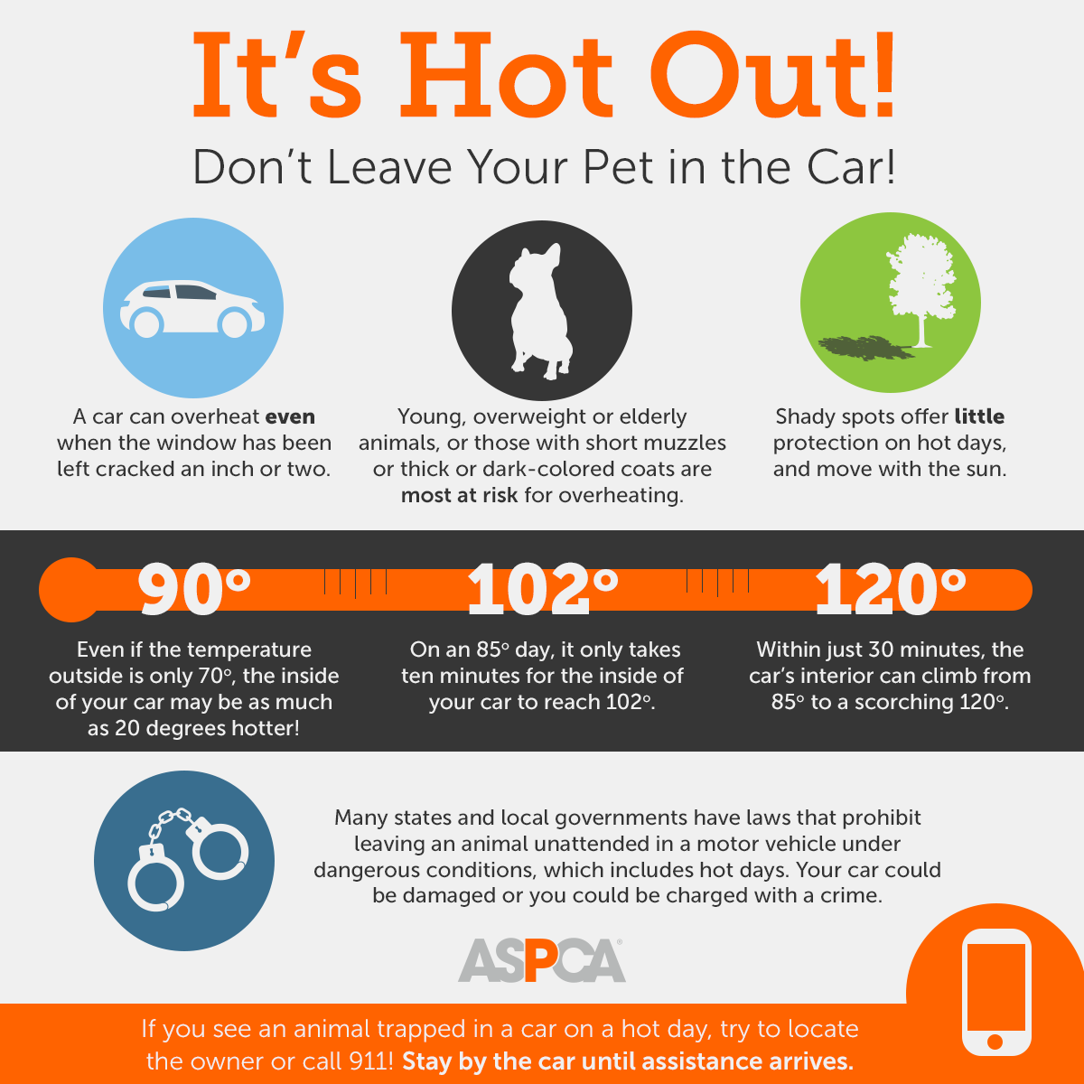 It's hot out! Don't leave your pet in the car!