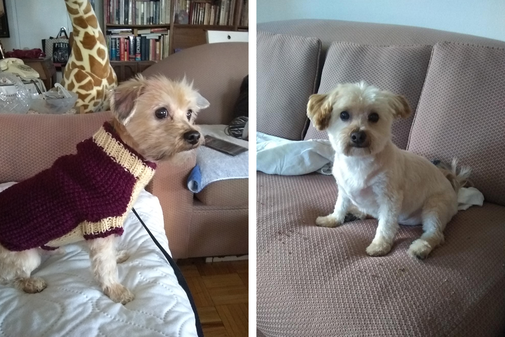 Dog in sweater on couch