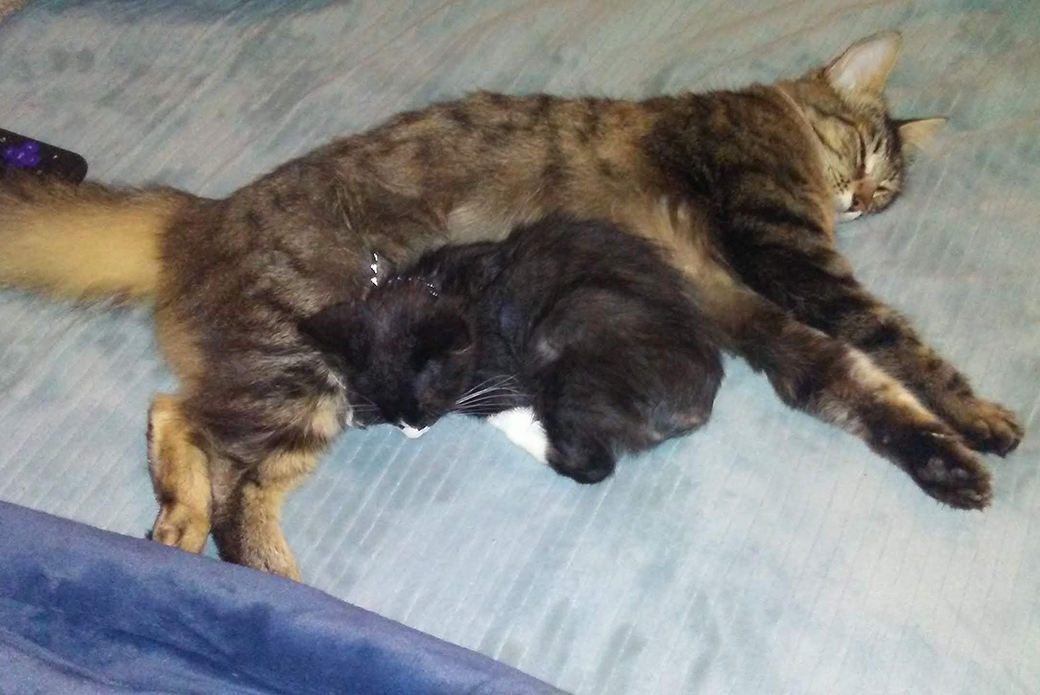 Alastar and chunky the cat