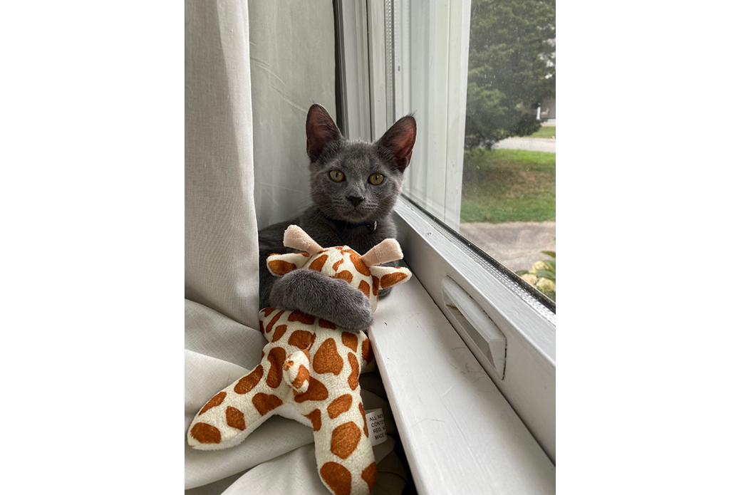 Aurora with a toy giraffe