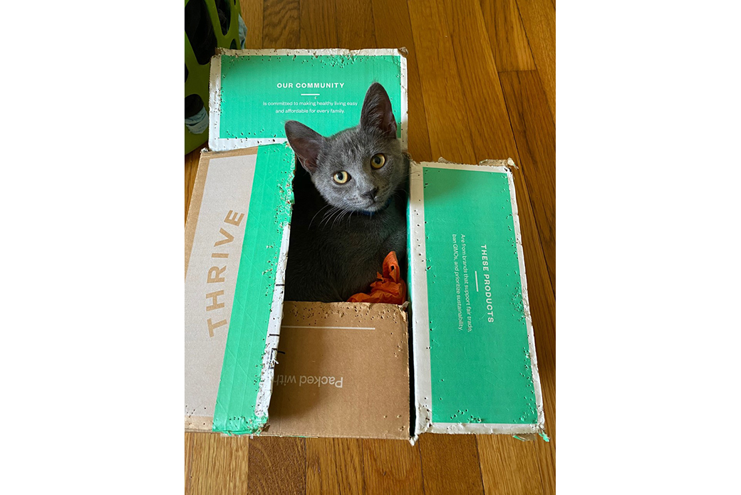 Aurora in a box