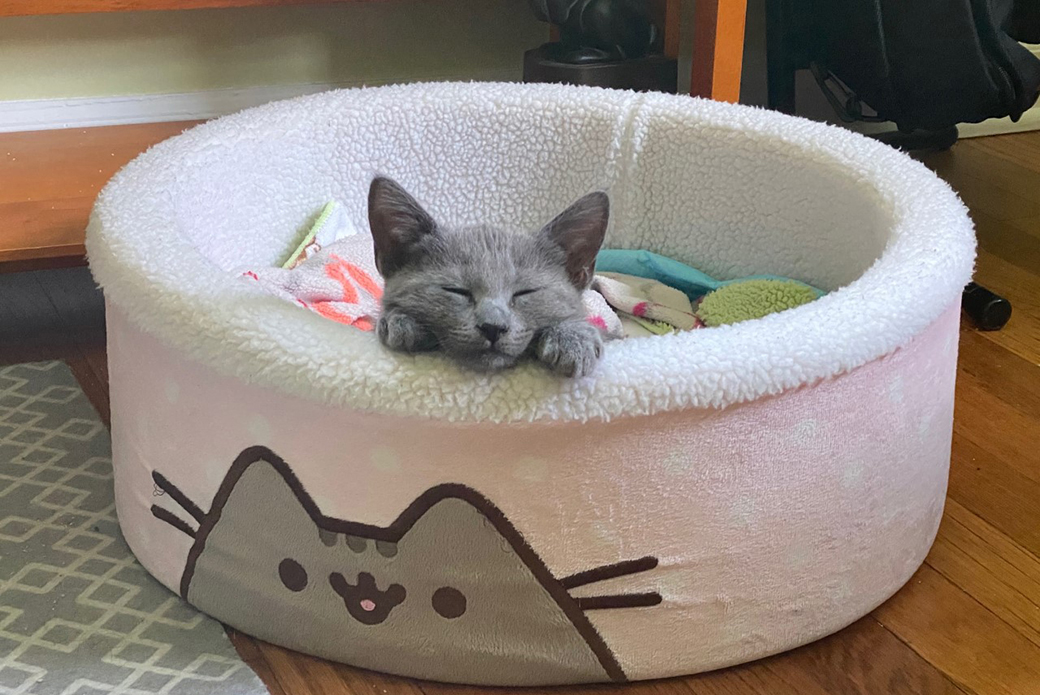 Aurora in a pusheen cat bed