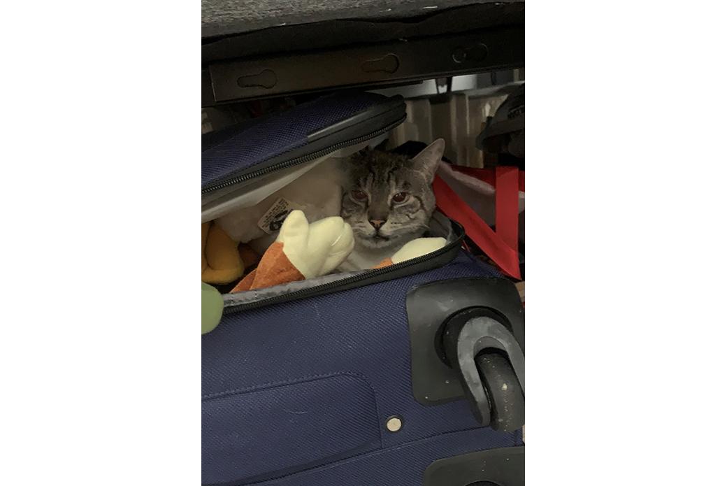 Bahrain hiding in luggage