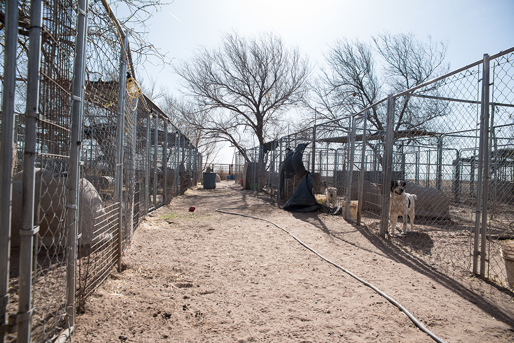failed animal sanctuary in New Mexico
