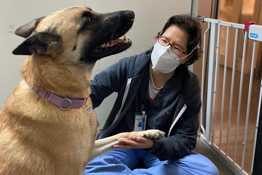 Bella at the ASPCA