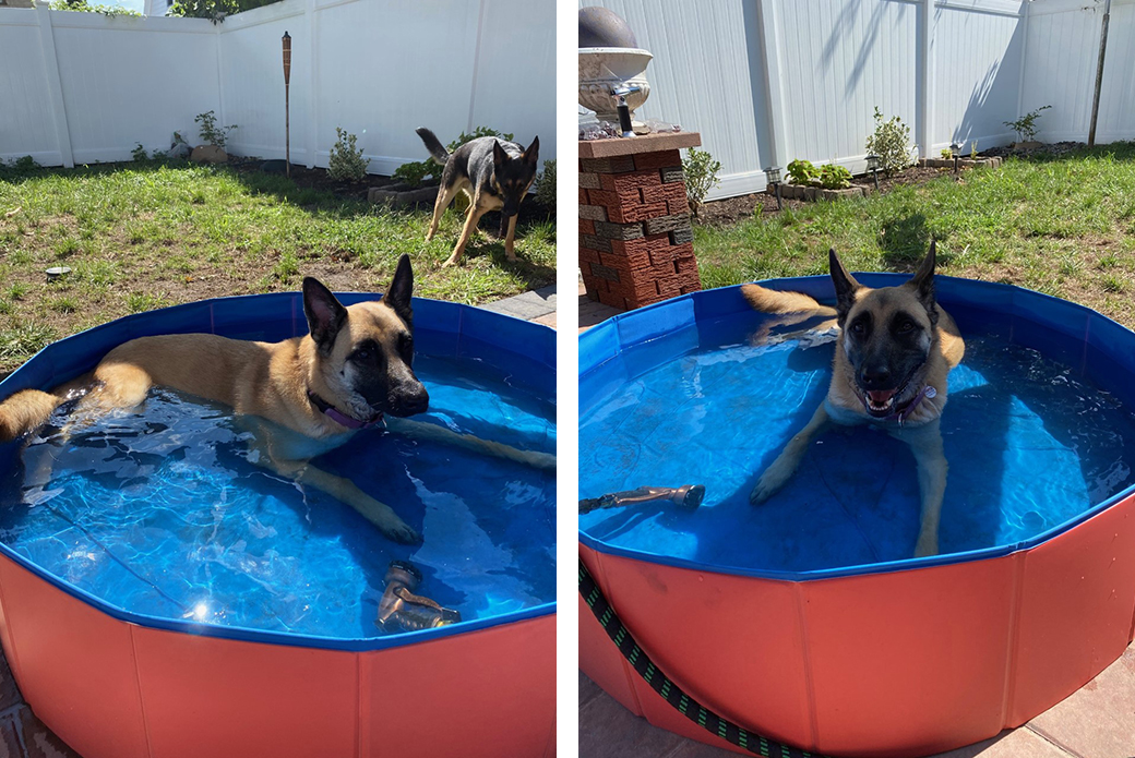 Bella in a swimming pool