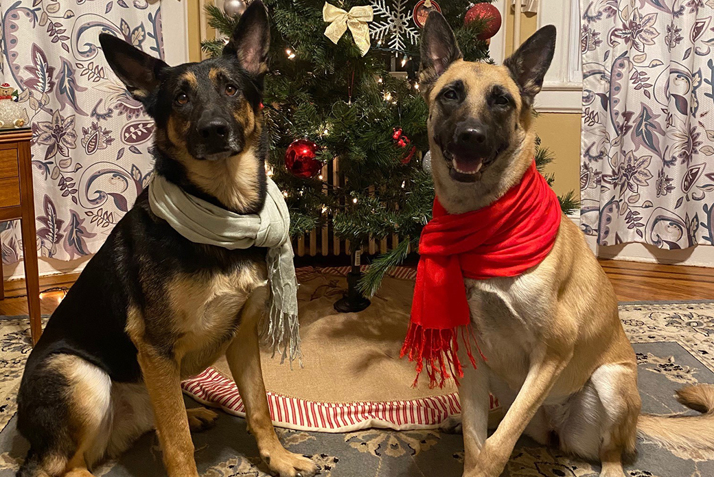 Bella abd Jack in front of a christmas tree
