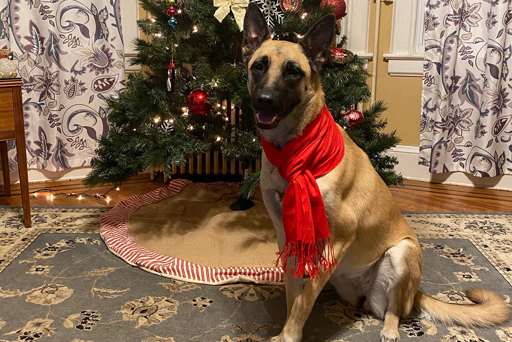 Bella in front of a christmas tree