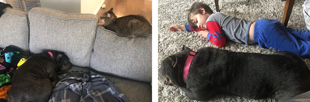 Blue resting with a cat and Cara's 5 year old son