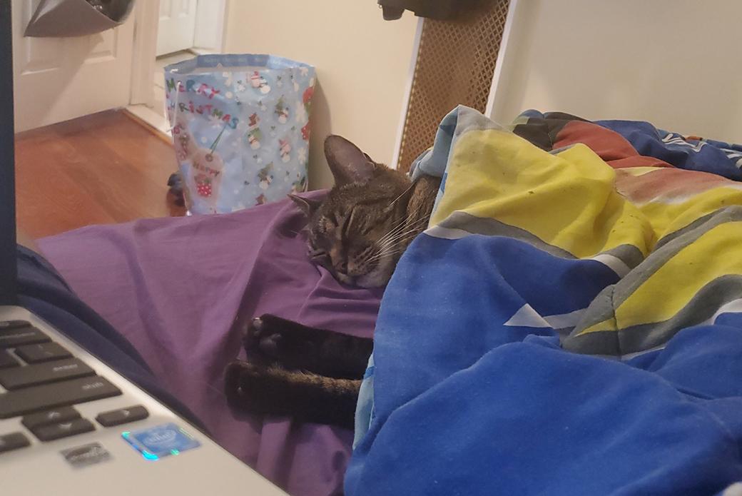braveheart sleeping under blankets