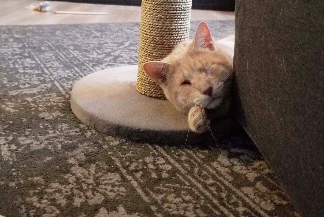 Charlie resting on his scratching post