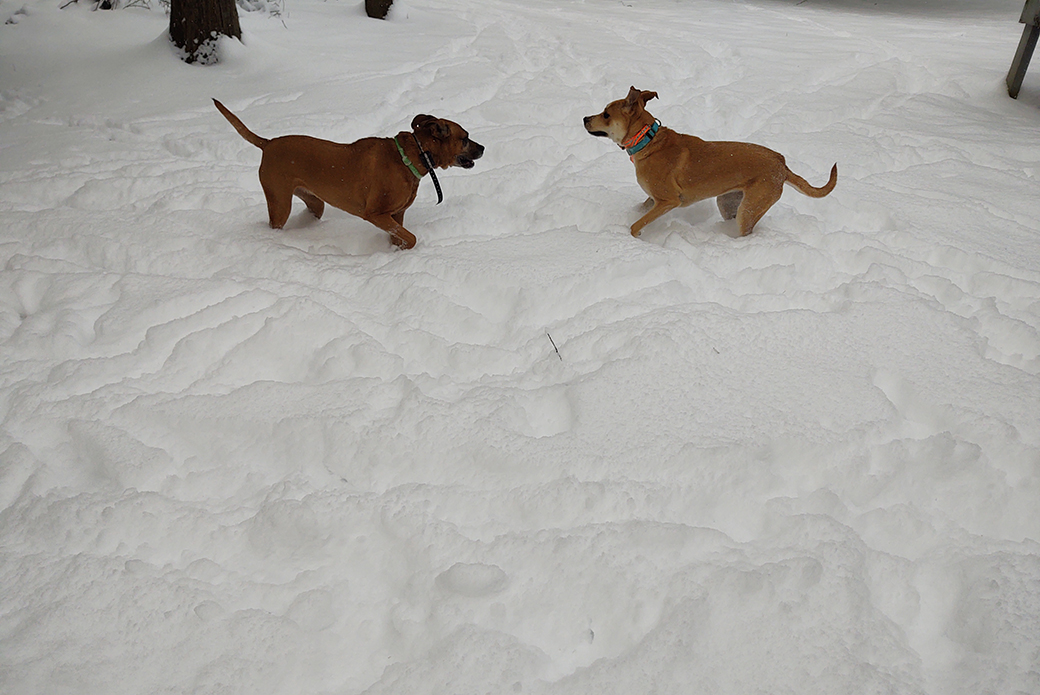 Cindy and Mindi playing in the snow