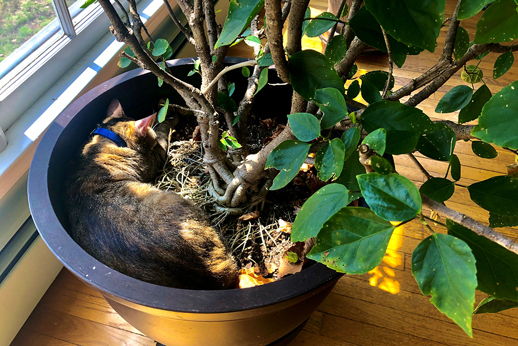 Della in a potted plant