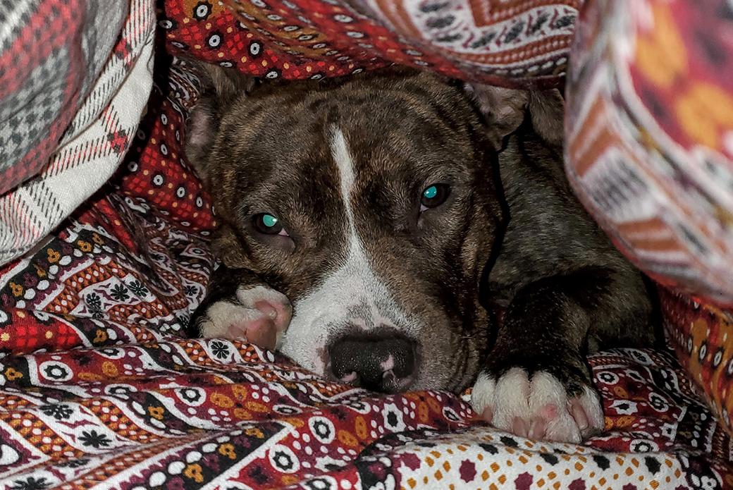 Luke resting under blankets
