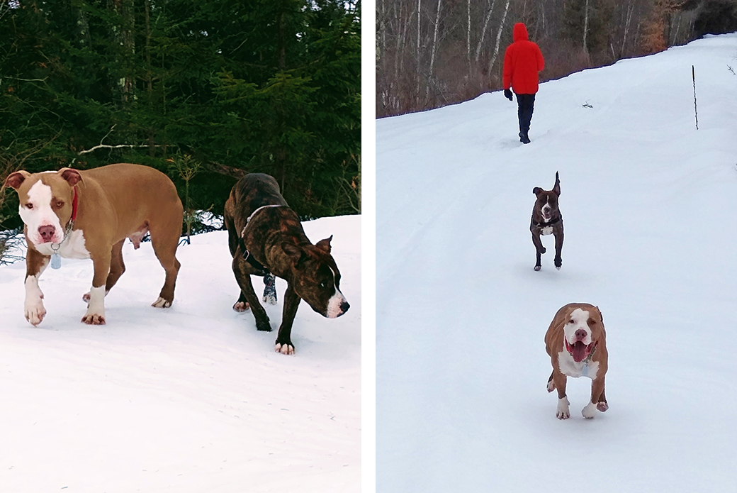 Luke in the snow with another pitbull