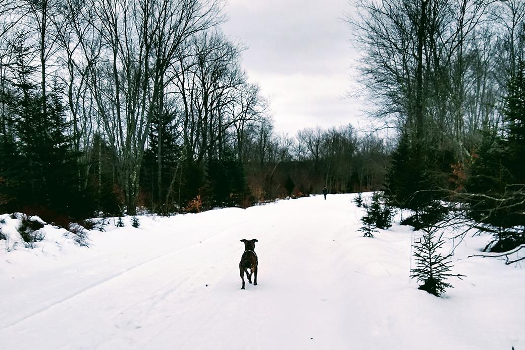 Luke running in the snow