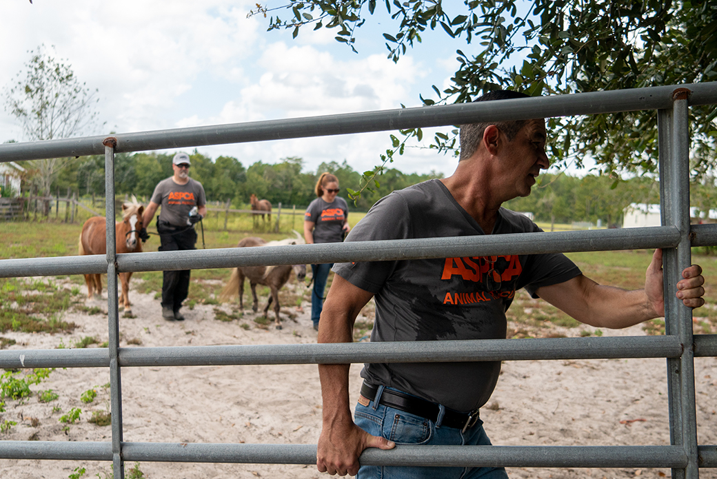 ASPCA rescuing the two miniature horses