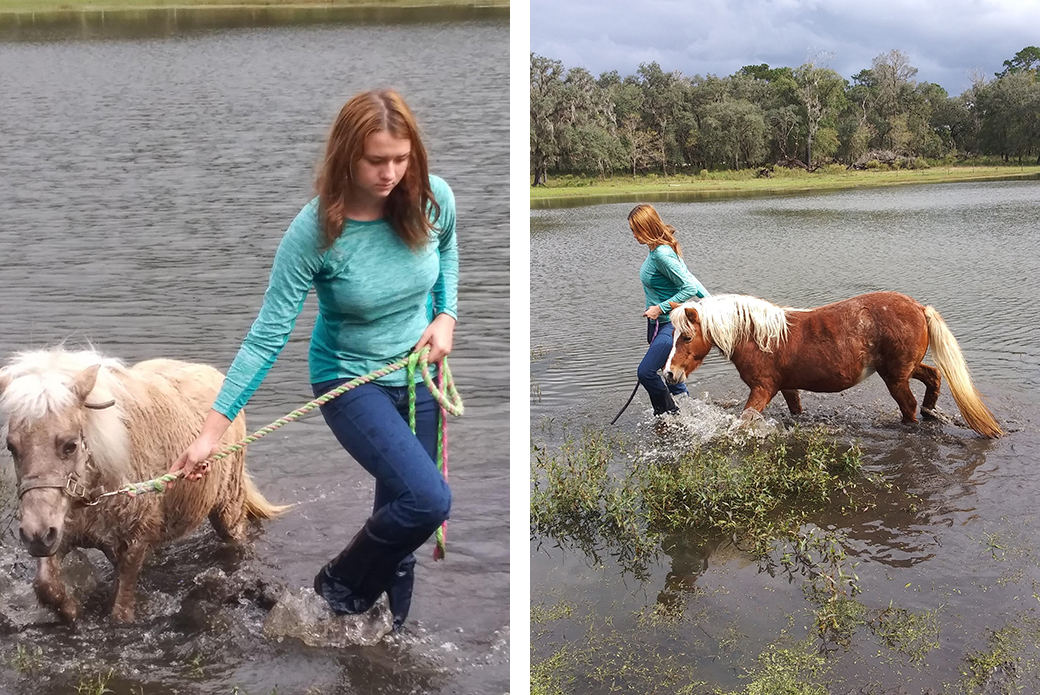 Jena and the two rescued mini horses walking through water