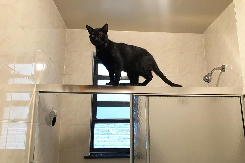 Ocho climbin on a shower