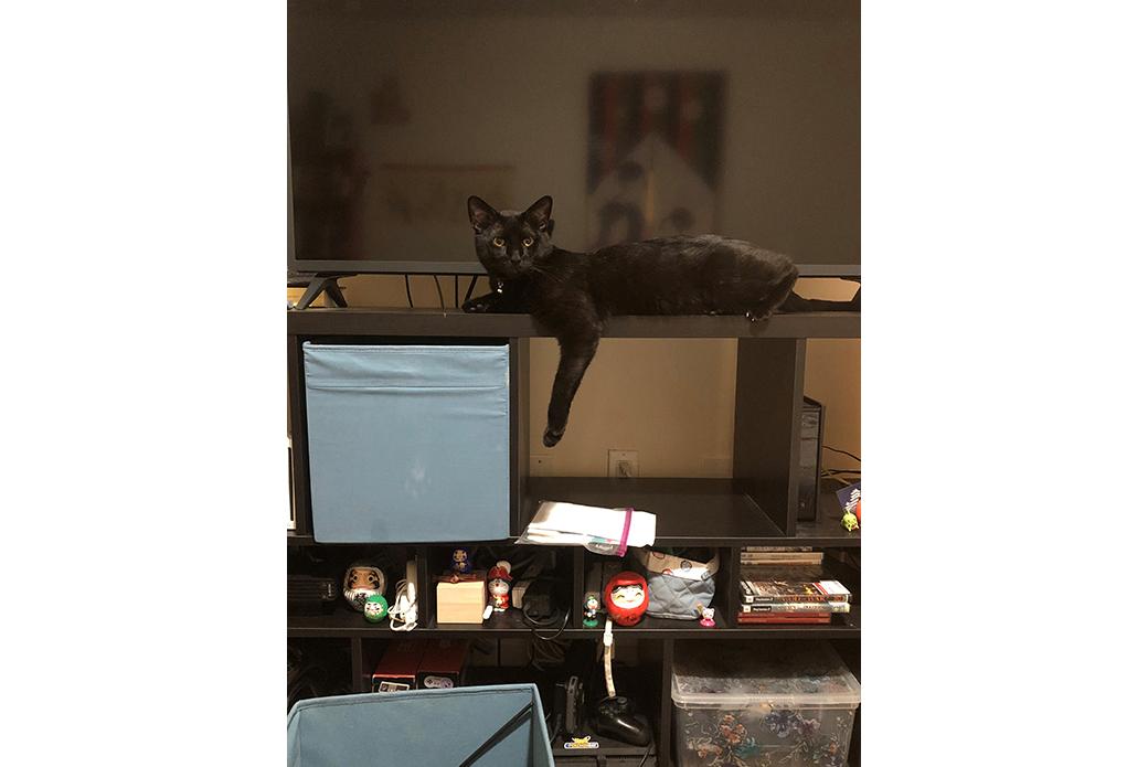 Ocho resting on a shelf