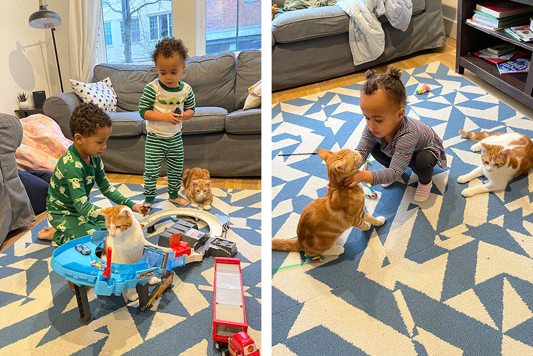 The children having play time with the cats