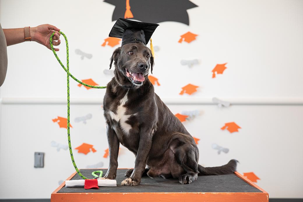Roux's graduation