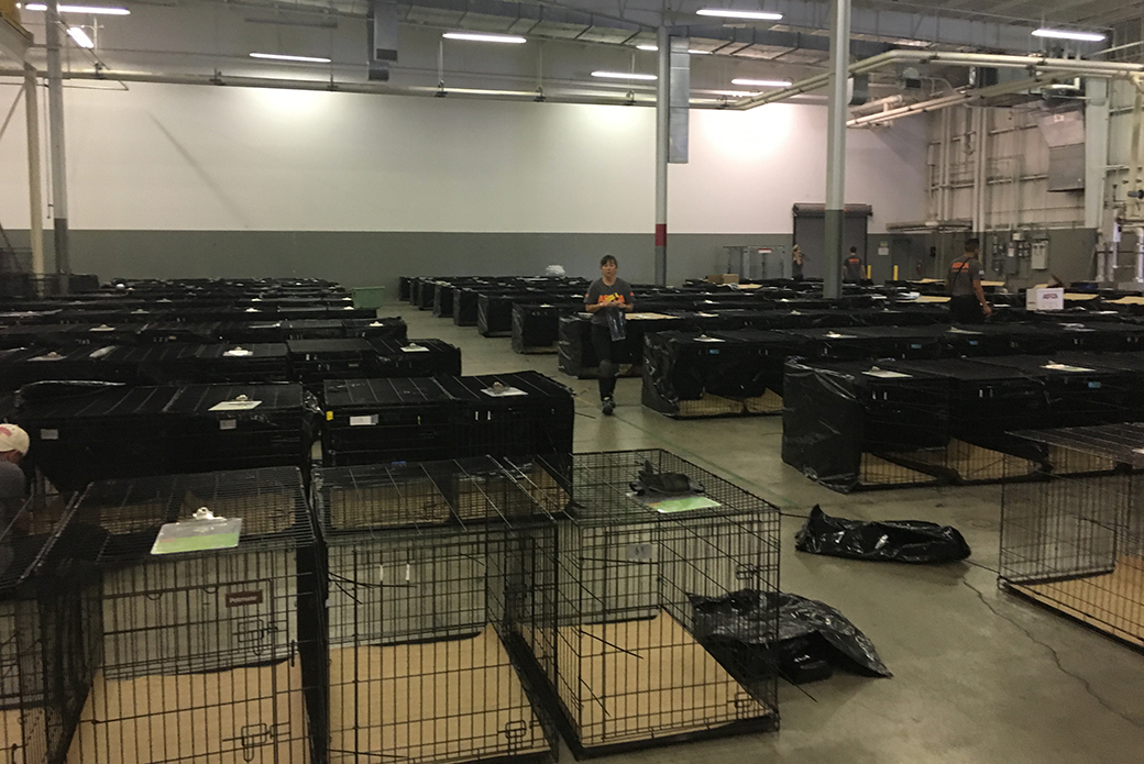 Rows of animal crates
