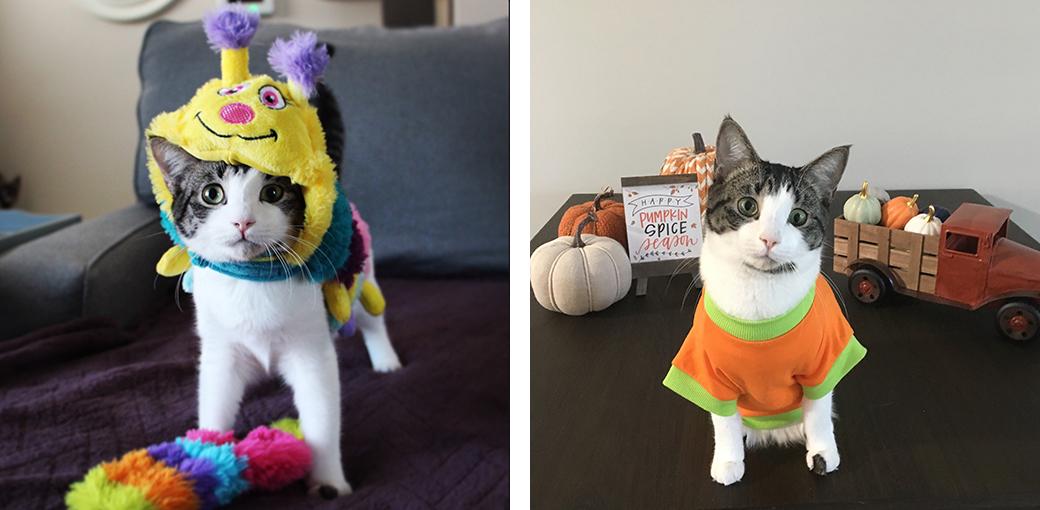 Cat in HAlloween costumes