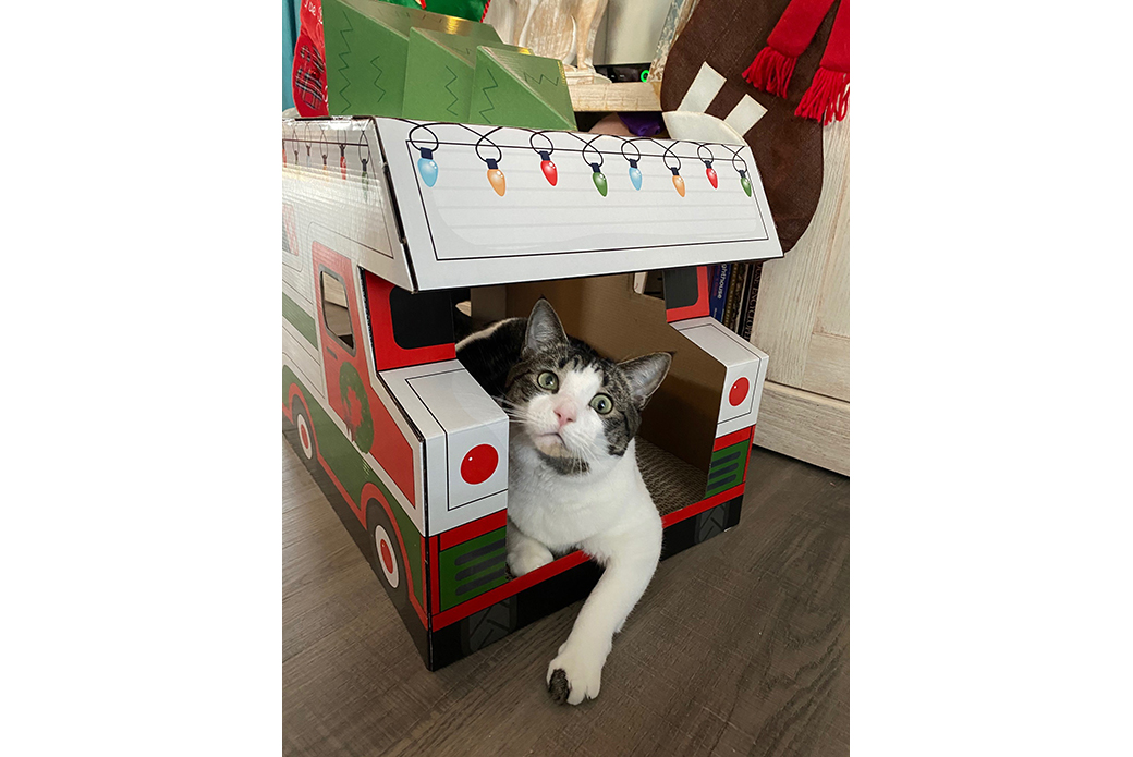 Cat in Christmas house