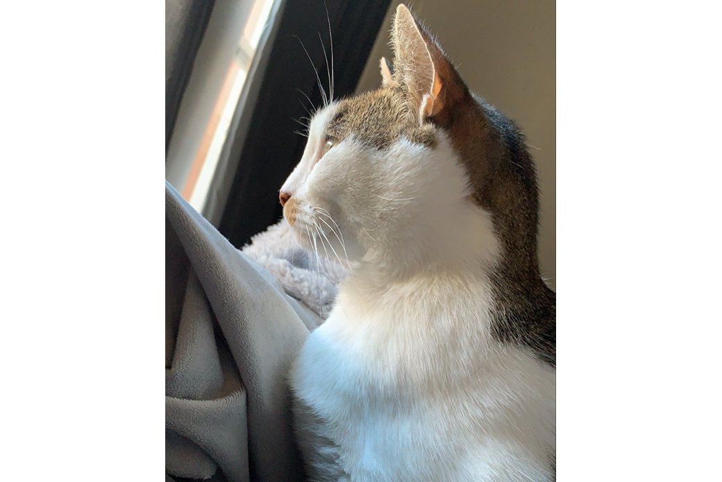 Scout looking out a window