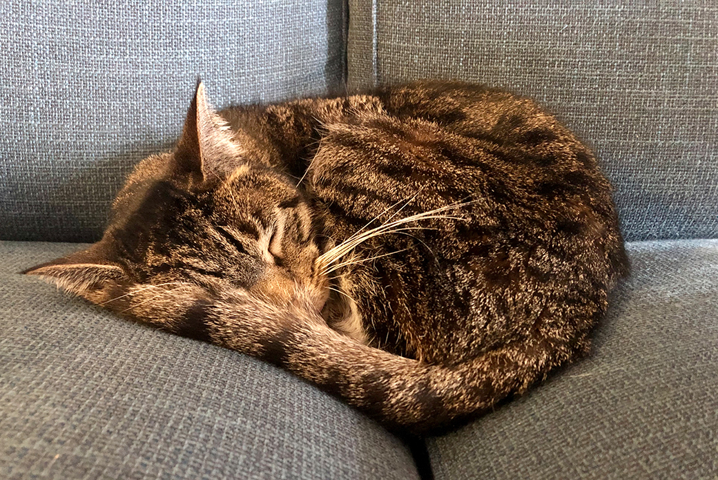 Wolffish sleeping