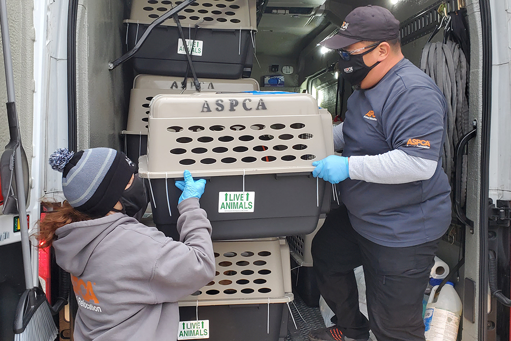 ASPCA responders moving rescues animals on a transport