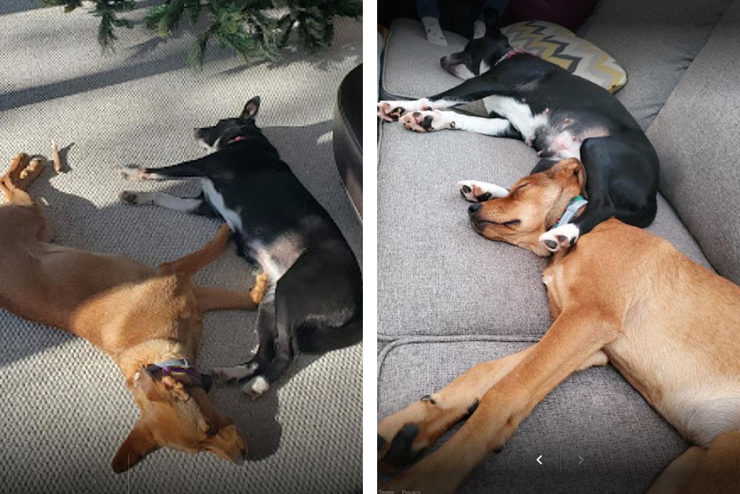 Bib and Chiquita sleeping