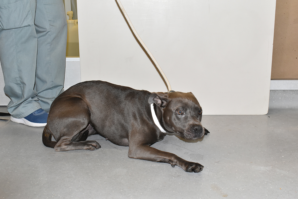 Zola after being rescued