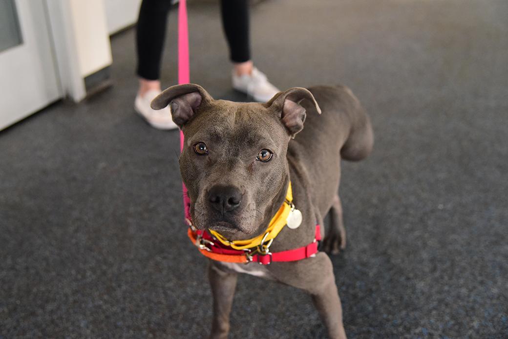 Zola at the ASPCA