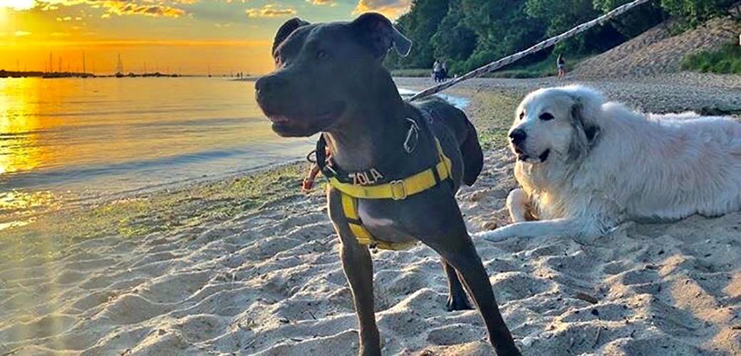 Zola at the beach
