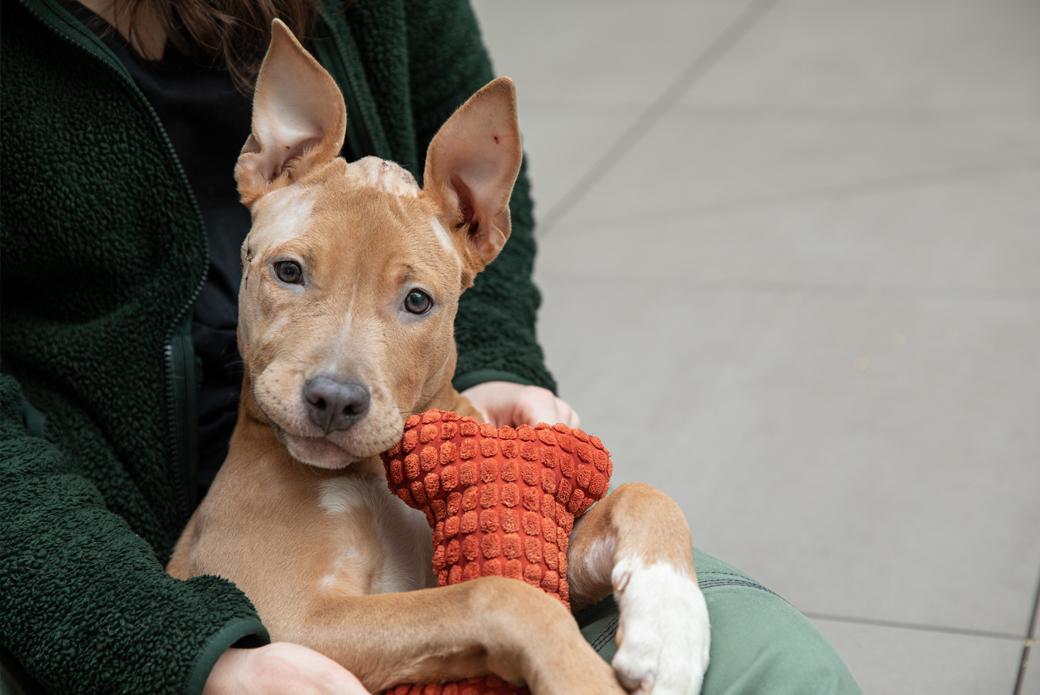 Dog with orange bone toy