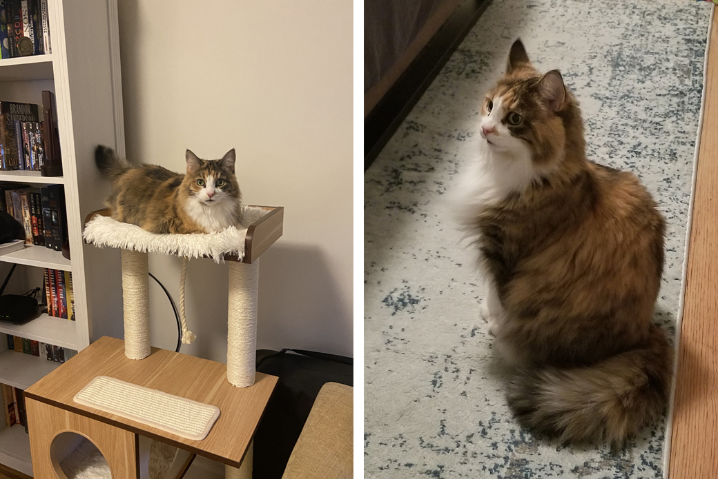 Cat lounging on cat tower
