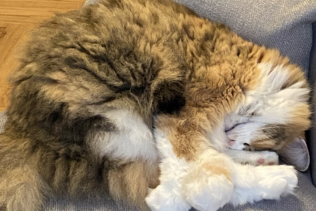 Cat curled up in ball