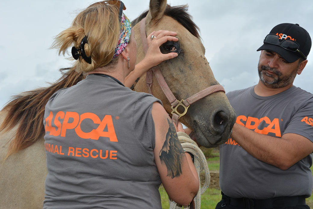 rescued horse with an eye injury