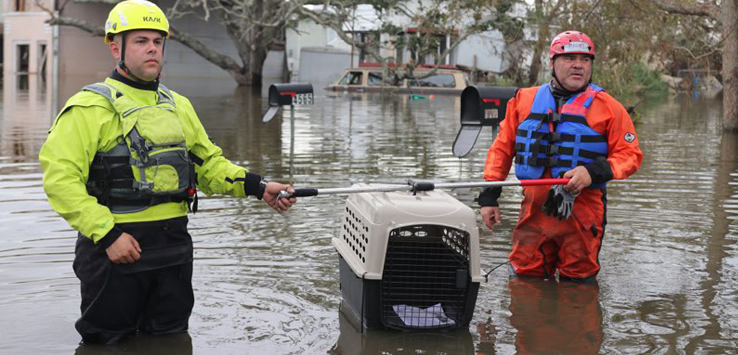 Rescuers with crate in water