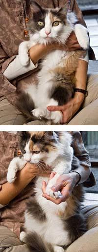 cat being held