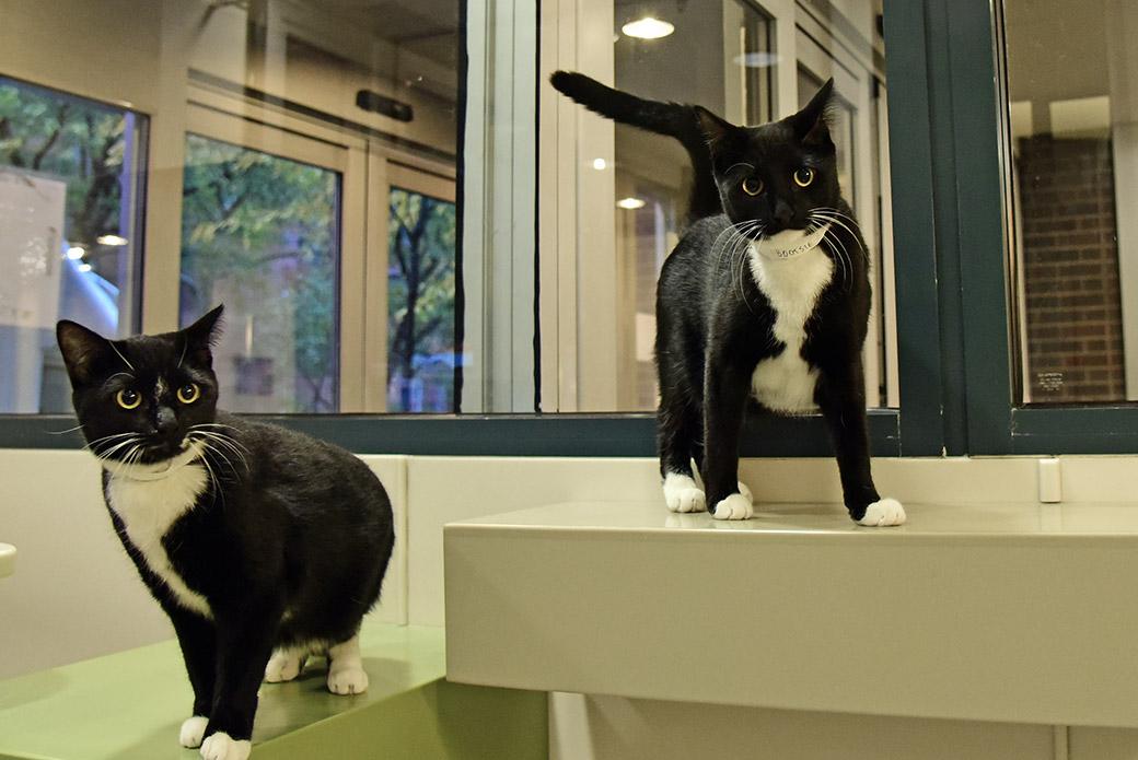 Isa and Bootsie