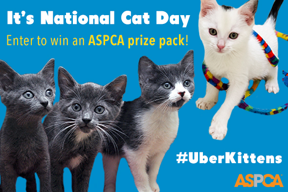 It's National Cat Day! Today, We're Helping Deliver Kittens Right to Your Door