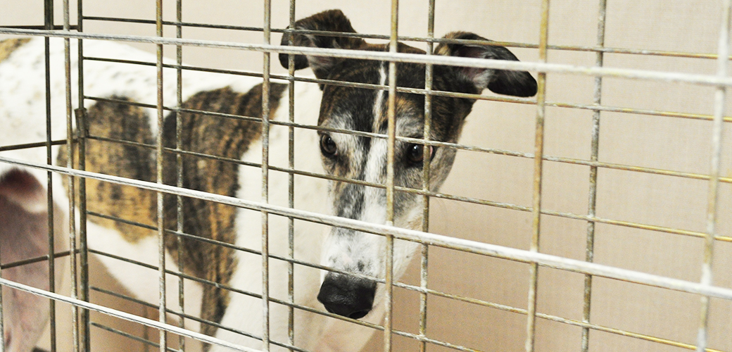 It's (Way Past) Time to End Greyhound Racing in America
