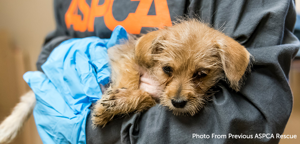 a small dog being rescued by an ASPCA volunteer