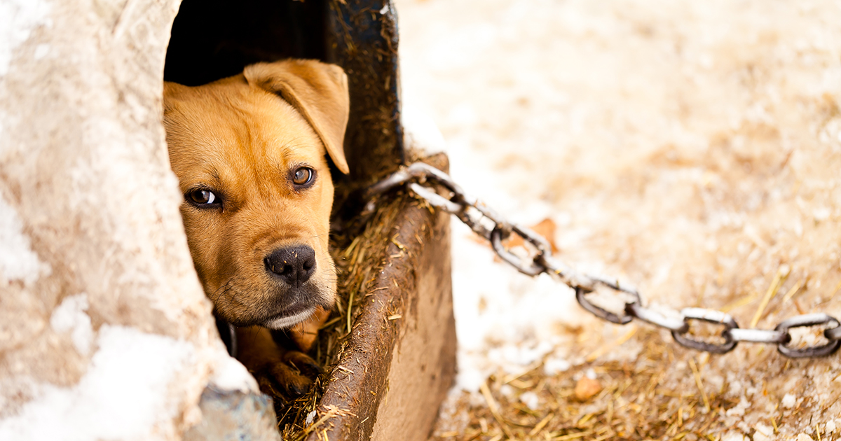 Maine Dog Rescue Laws