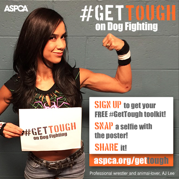 Join the ASPCA and Professional Wrestler AJ Lee to #GetTough on Dog Fighting
